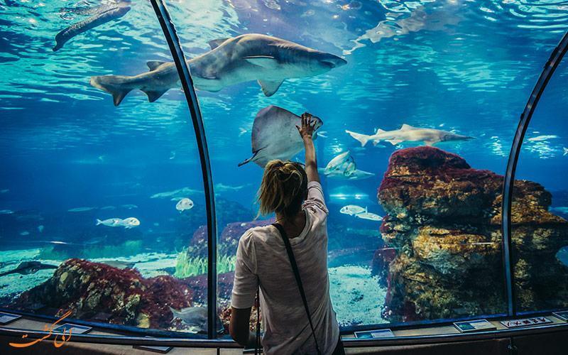 آکواریوم بارسلونا، مکانی برای آشنایی با دنیای زیر آب!